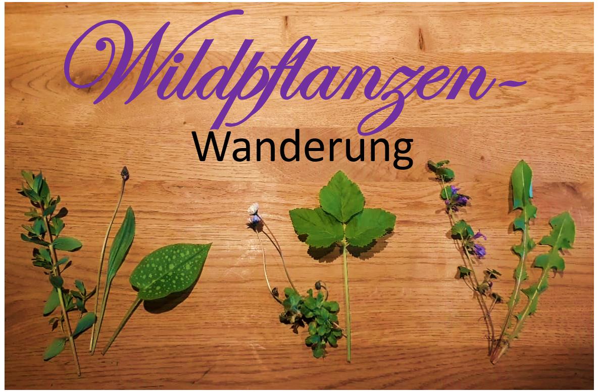 Wildpflanzen Wanderung